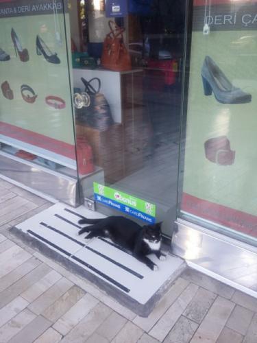 Хозяин магазина, как положено,встречает на входе